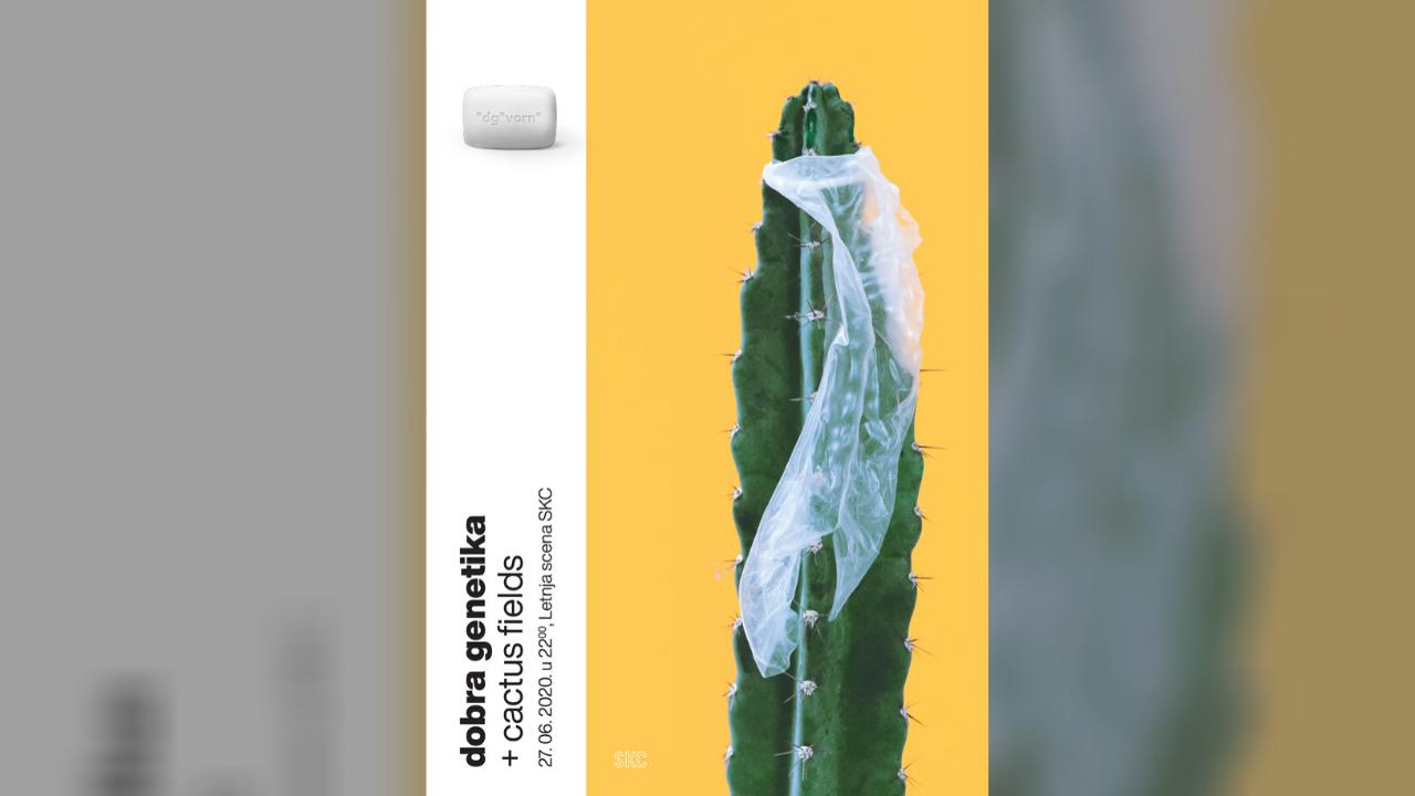 dobra genetika + cactus fields